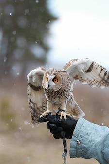 Uszatka renderowana w polu do latania i polowania