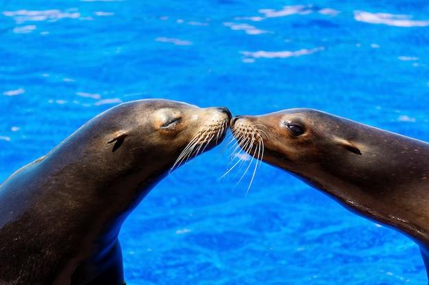 Uszczelki kissing w tle wody