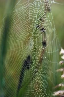 Uszkodzona mokra pajęczyna z kroplami deszczu