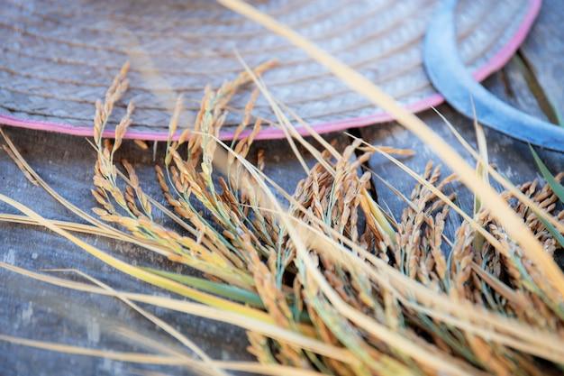 Uszy ryżu na drewnie.
