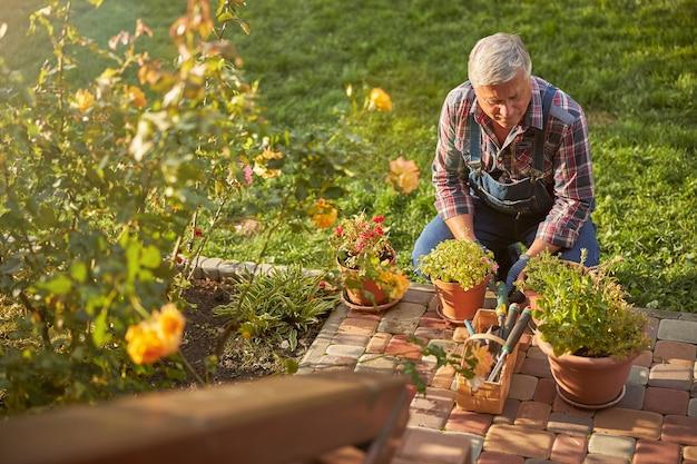 Uważny starszy ogrodnik kucający podczas pielęgnacji roślin domowych na zewnątrz