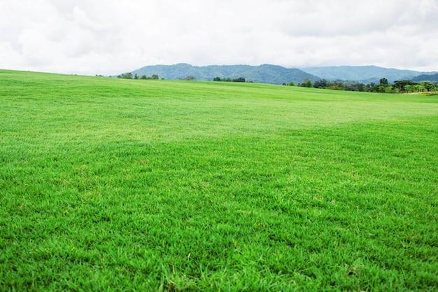 Użytki zielone na wsi.