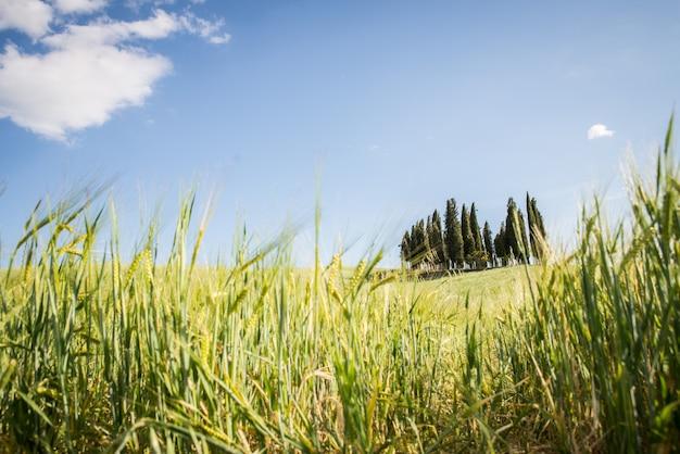 Val D'orcia, Toskania Premium Zdjęcia
