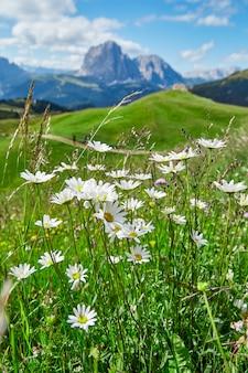 Val gardena łąki i góry