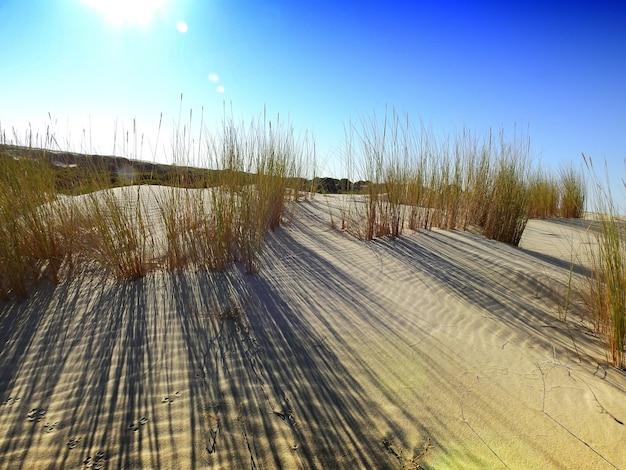 Vegetacin sobre las dunas moviles del parque de donana andalucia espana