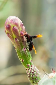 Vespula germanica jest na kwiatach.