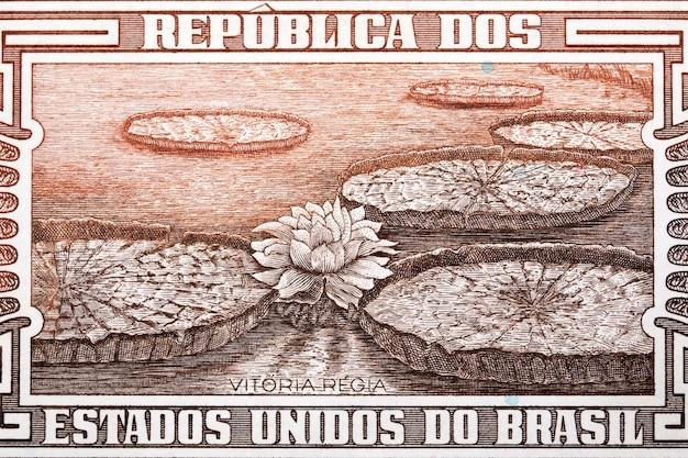 Victoria amazonica ze starych brazylijskich pieniędzy