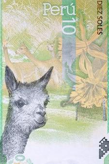 Vicuna portret z peruwiańskich pieniędzy