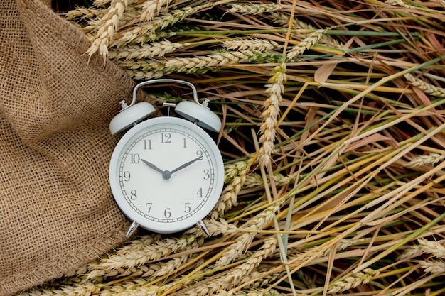 Vintage budzik na polu pszenicy