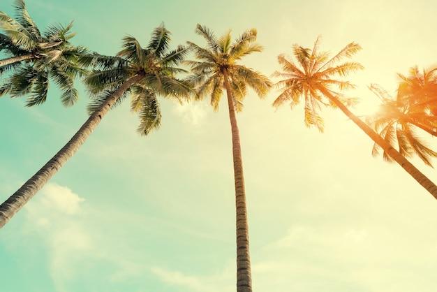 Vintage charakter zdj? cia palmy kokosowe w morzem tropikalnych wybrze? a