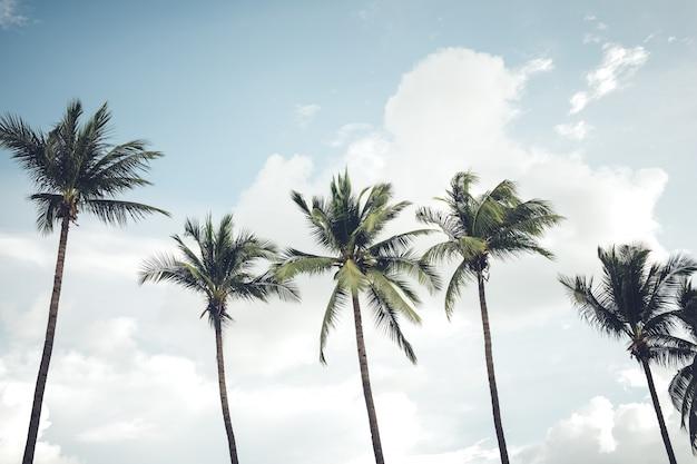 Vintage charakter zdj? cia palmy kokosowe w nadmorskich tropikalnych wybrze? y