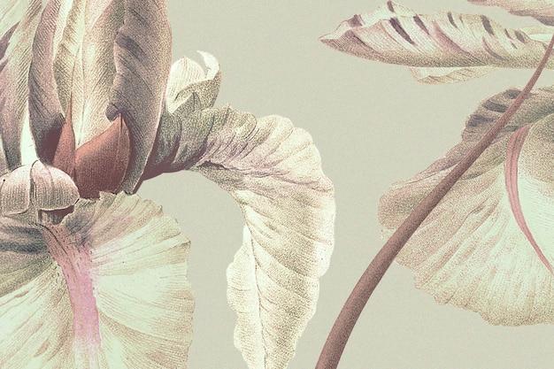 Vintage kwiatowy tło z ilustracją kwiatu tęczówki, zremiksowane z dzieł z domeny publicznej