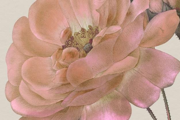 Vintage kwiatowy tło z ilustracją róży adamaszkowej, zremiksowane z dzieł należących do domeny publicznej