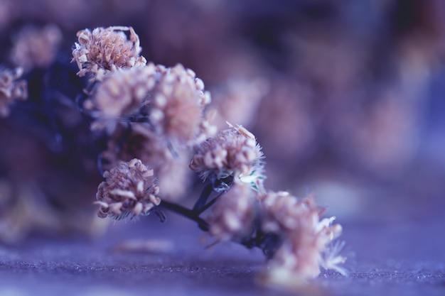 Vintage kwiaty wykonane z gradientem w tle