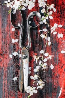 Vintage nożyczki i gałąź kwiat