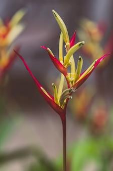 Vintage ptak rajski kwiat, kwiat heliconia z zielonych liści