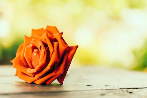 Vintage róża
