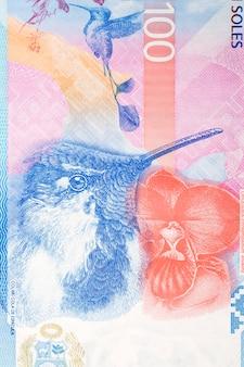 Violetear portret z peruwiańskich pieniędzy
