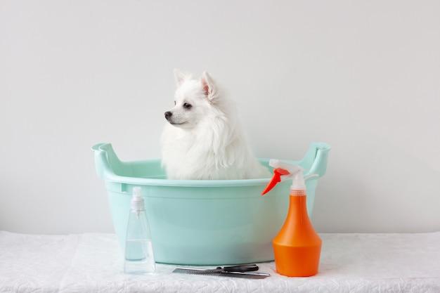W basenie siedzi mały piesek, biały pomeranian, w pobliżu znajdują się produkty do pielęgnacji sierści. pojęcie pielęgnacji, kąpieli zwierząt.