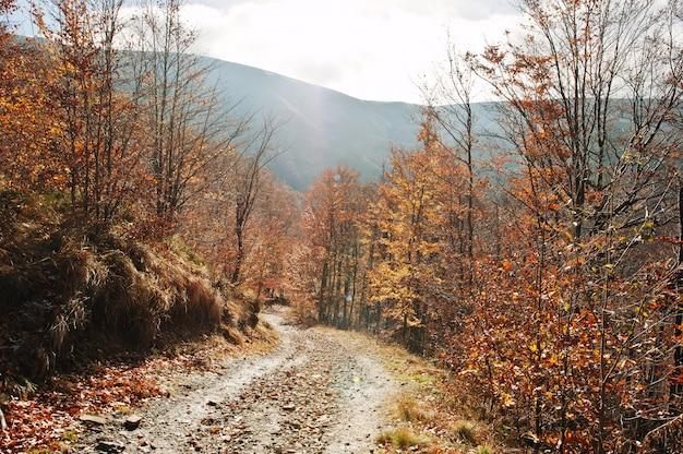W dół drogi na jesień las na wzgórzu góry.