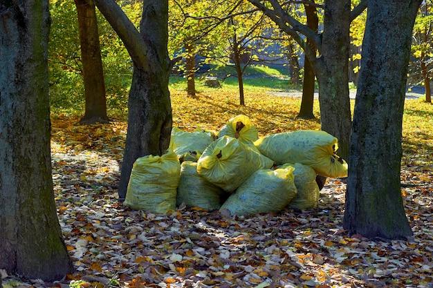 W jesiennym parku układane są plastikowe torby z suchymi liśćmi. sezonowe czyszczenie opadłych liści