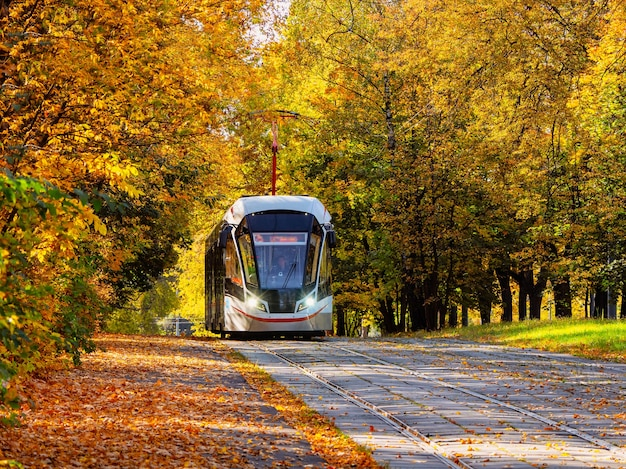 W jesiennym tunelu jeździ tramwaj. szyny tramwajowe w korytarzu żółtych jesiennych drzew w moskwie.