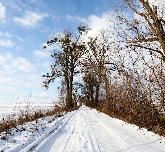 W koleinach pozostawionych po jeździe samochodami przez wieś w sezonie zimowym wzdłuż drogi rosną stare drzewa