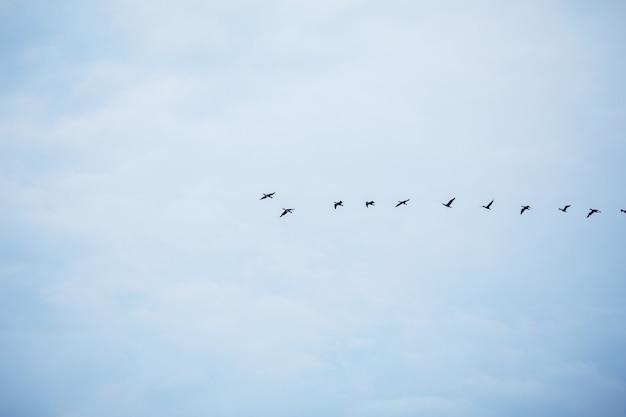 W niebieskim jesiennym niebie latają ptaki stada z rzędu