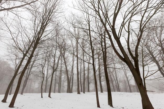 W oddali widać zimowy las z nagimi drzewami liściastymi w dziennej mgle i mgle