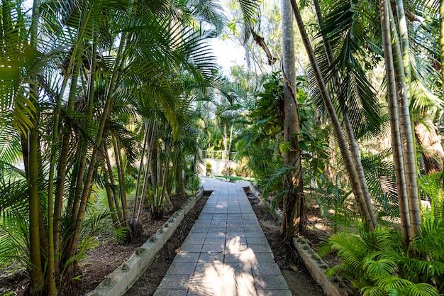 W parku chodnik wyłożony jest kamiennymi płytami. płyty chodnikowe na chodniku między roślinami tropikalnymi. gaj palmowy. azja