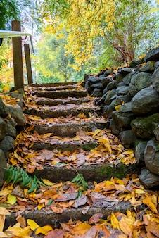 W parku jesiennym skaliste schody pokryte są żółtymi liśćmi