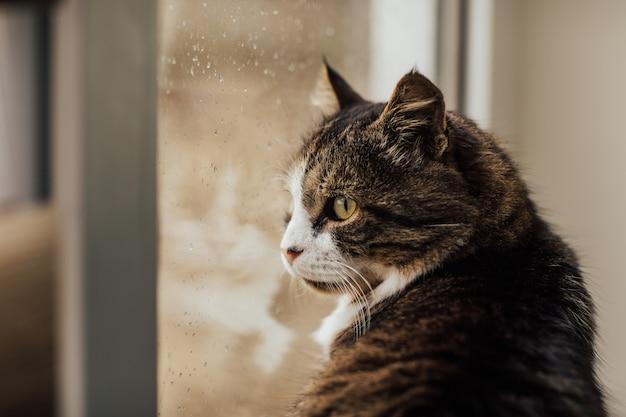 W pobliżu okna siedzi kot. krople deszczu na szybie.
