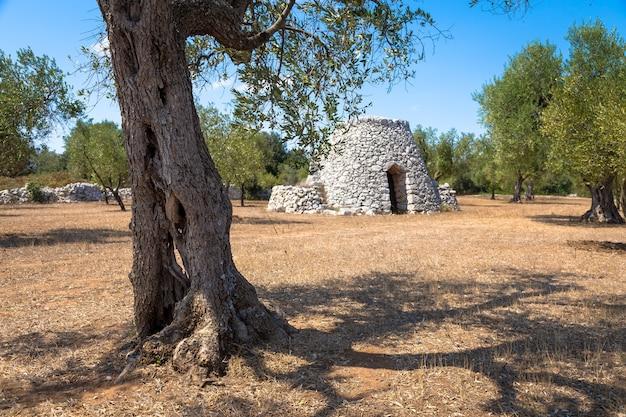W rejonie salento, na południu włoch, tradycyjny wiejski magazyn o nazwie furnieddhu w lokalnym dialekcie. jest to tradycyjny budynek z kamienia na terenie rolniczym zajmującym się uprawą oliwek.