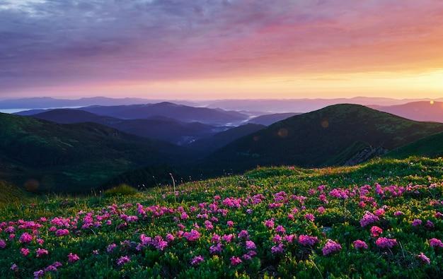 W rozkwicie. majestatyczne karpaty. piękny krajobraz. widok zapierający dech w piersiach.