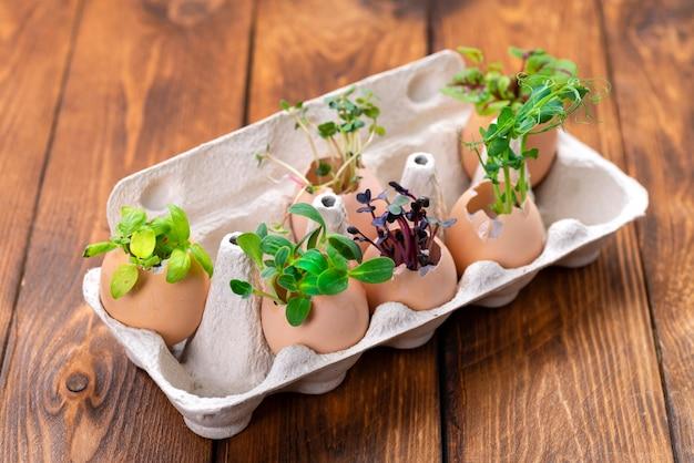 W skorupkach jaj uprawia się różnorodne mikrozielone warzywa