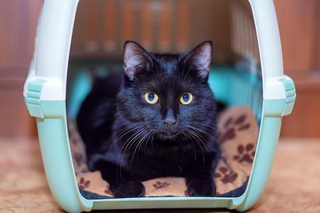 W swojej torbie siedzi piękny czarny kot