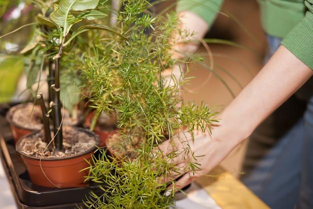 W trosce o rośliny doniczkowe. koncepcja przydomowego ogrodu. czas wiosenny