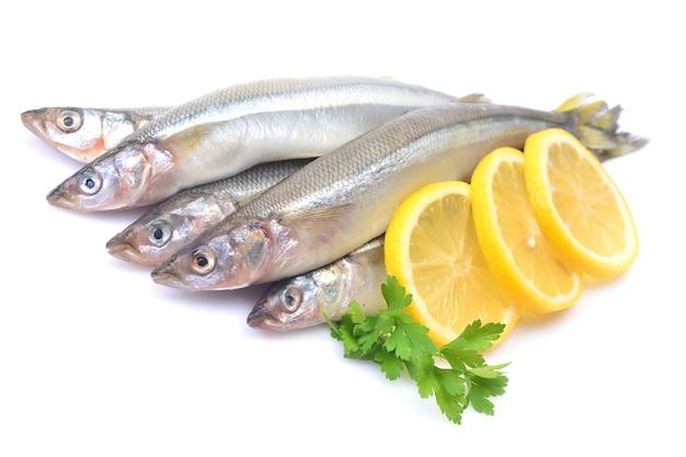 Wąchaj ryby