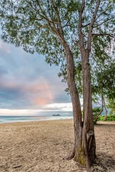 Waimanalo beach, wyspa królików i drzewa ironwood na nawietrznej stronie oahu na hawajach