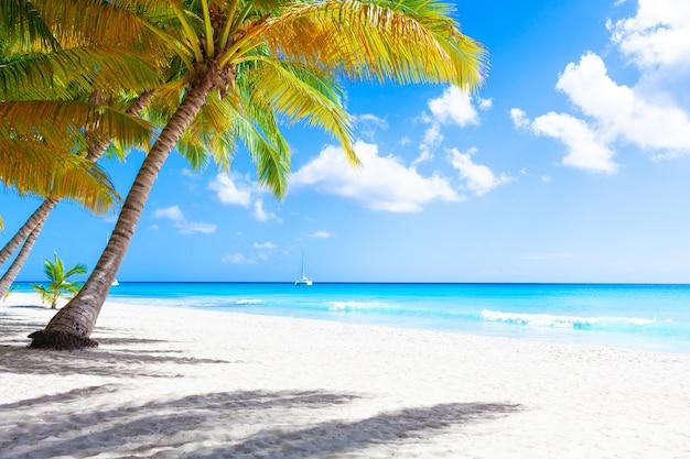 Wakacje letnie wakacje tapeta tło - słoneczna tropikalna egzotyczna karaibska rajska plaża z białym piaskiem