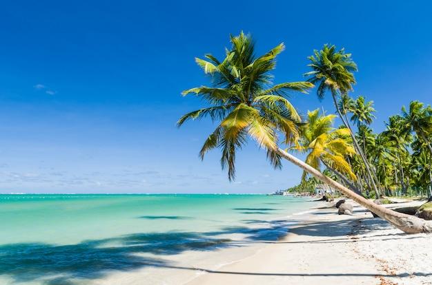 Wakacyjny cień, piękny obraz plaży carneiros w pernanbuco