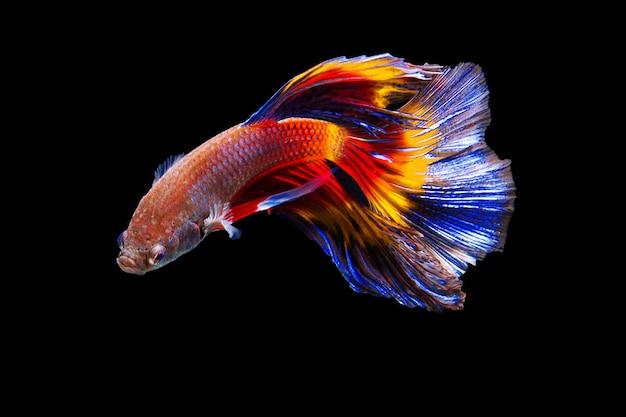 Walcząca ryba na czarnym tle.