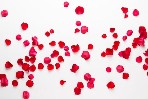 Walentynki. płatki kwiatów róży na białym tle. walentynki-dzień tło. leżał na płasko, widok z góry, miejsce na kopię.