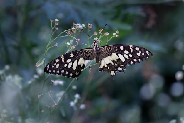 Wapno motyl na kwiat roślinie