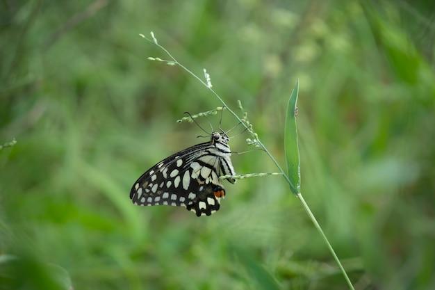Wapno motyla siedzącego na rośliny kwiat otoczony zielenią