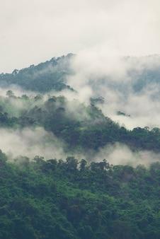 Warstwy lasu tropikalnego