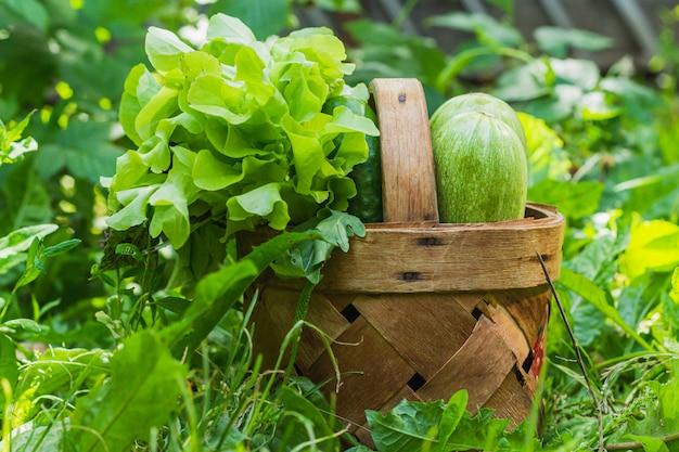 Warzywa i zioła są w wiklinowym koszu, który stoi na trawniku w słońcu na zielonej trawie