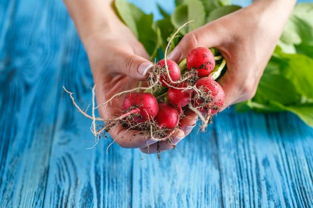 Warzywa organiczne. ręce kobiety ze świeżo zebranych warzyw