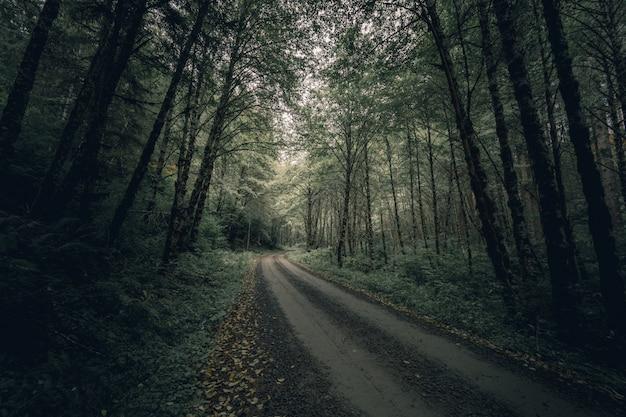 Wąska błotnista leśna ścieżka otoczona gęstymi drzewami i zielenią w ciągu dnia