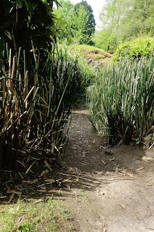 Wąska ścieżka otoczona trawą i drzewami